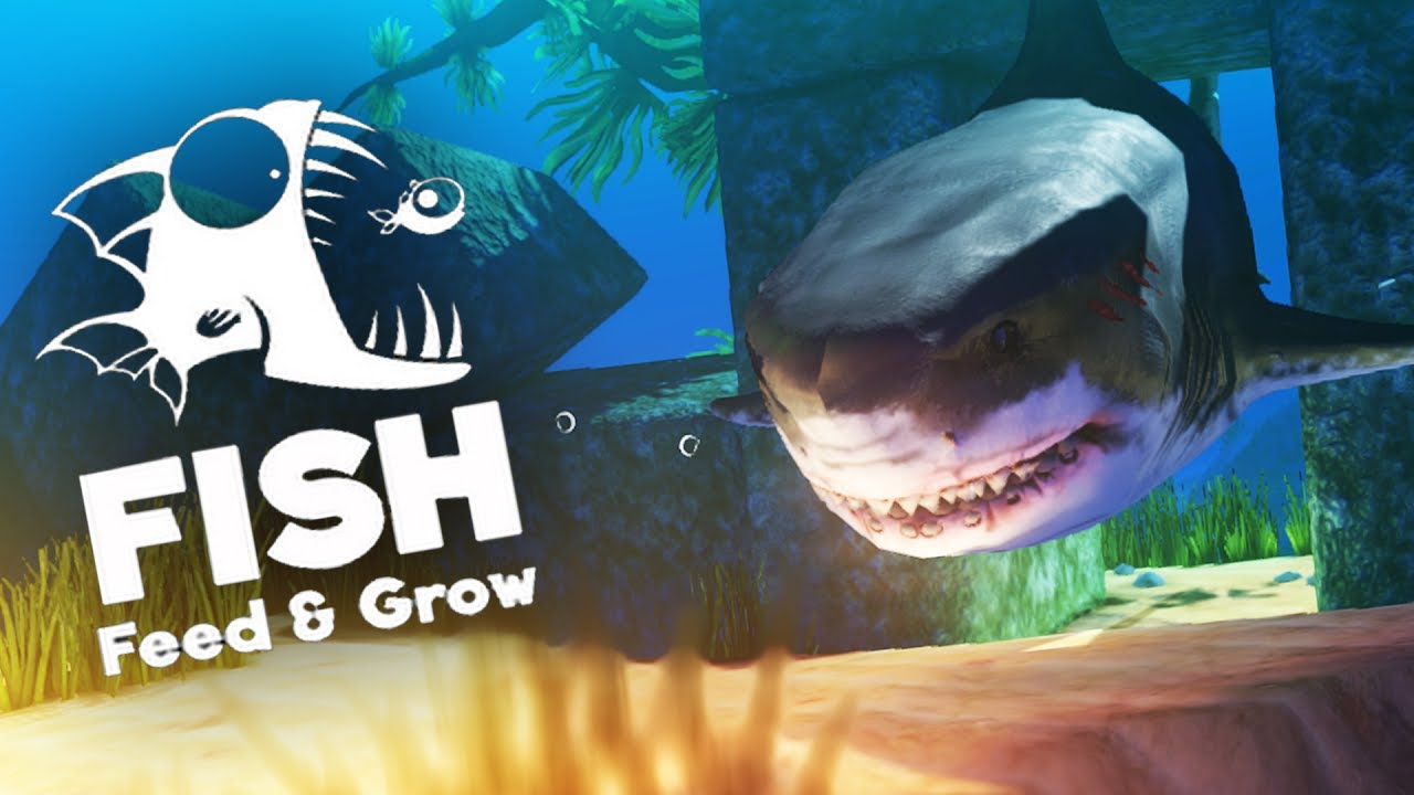 great white shark grow guide