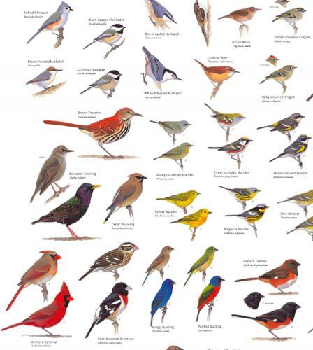 birds of south america field guide