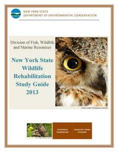 wildlife rehabilitation exam study guide